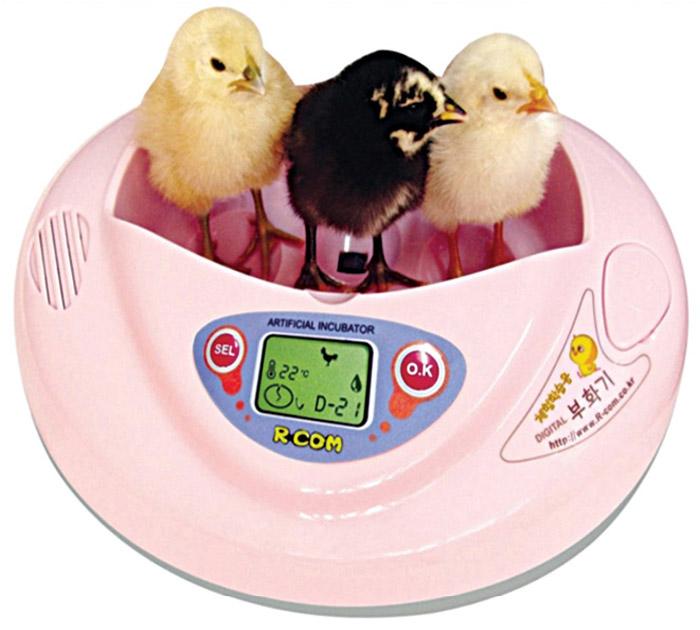 Digital egg incubator