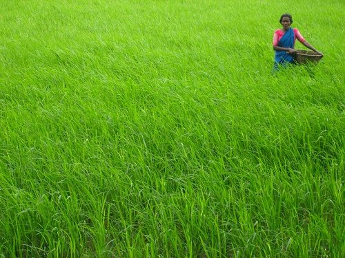 Developing Agro-IoT Solutions and Smart Concepts To Technically Empower Indian Farmers